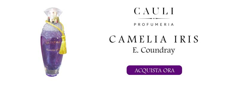 Camelia Iris